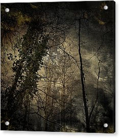 Trees 4 Acrylic Print by Andy Walsh