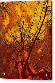 Acrylic Print featuring the photograph Trees by Allen Beilschmidt