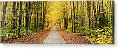 Trees Along A Pathway In Autumn Acrylic Print