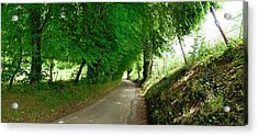 Trees Along A Road Acrylic Print by Panoramic Images