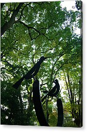 Trees And Black Birds In The Park Acrylic Print