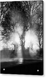 Trees And Fog Acrylic Print by David Pinsent