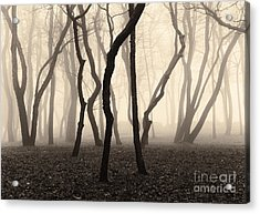 Trees And Fog No. 1 Acrylic Print by David Gordon