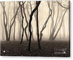 Trees And Fog No. 1 Acrylic Print