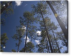 Acrylic Print featuring the photograph Trees And Nature by Charles Beeler