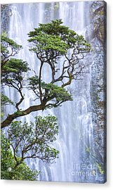 Trees And Waterfall Acrylic Print