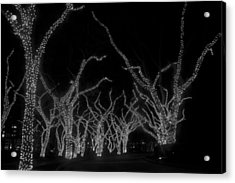 Acrylic Print featuring the photograph Trees Bejeweled by Jim Snyder