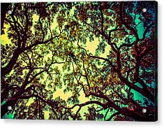 Trees Closing In Acrylic Print