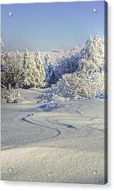 Trees Covered With Snow In A Sunny Winter Day Acrylic Print