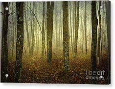 Trees II Acrylic Print