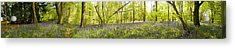 Trees In A Forest, Thursford Wood Acrylic Print by Panoramic Images