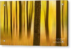 Acrylic Print featuring the photograph Trees In Autumn Forest by Rima Biswas