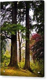 Trees In Autumn Glory. Scotland Acrylic Print by Jenny Rainbow