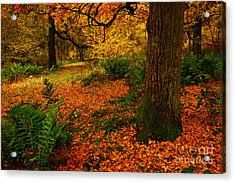 Trees In Autumn Woodland Acrylic Print