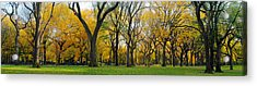 Acrylic Print featuring the photograph Trees In Central Park by Yue Wang