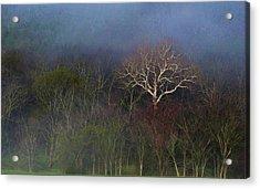 Trees In Fog 4 Acrylic Print by Dena Kidd