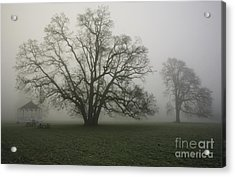 Trees In Fog Acrylic Print by Rich Collins