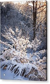Trees In Forest After Winter Storm Acrylic Print