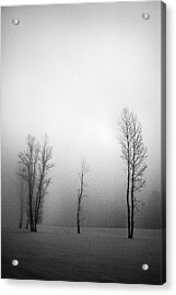 Trees In Mist Acrylic Print by Davorin Mance