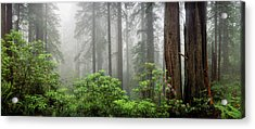 Trees In Misty Forest Acrylic Print