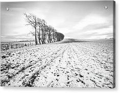 Trees In Snow Scotland V Acrylic Print by John Farnan