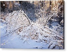 Trees In Snowy Forest After Winter Storm Acrylic Print
