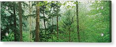 Trees In Spring Forest, Turkey Run Acrylic Print by Panoramic Images