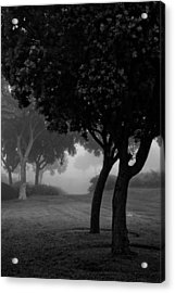 Trees In The Midst 1 Acrylic Print