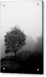 Trees In The Midst 2 Acrylic Print