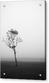 Trees In The Midst 4 Acrylic Print