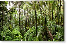 Trees In Tropical Rainforest, Eungella Acrylic Print
