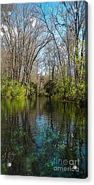 Trees In Water Acrylic Print