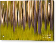 Acrylic Print featuring the digital art Trees by Jerry Fornarotto