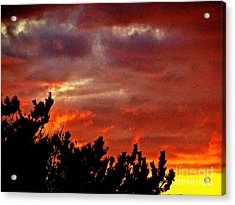 Trees Knowing The Sky Acrylic Print by Q's House of Art ArtandFinePhotography