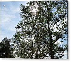 Trees At The Park Acrylic Print by Laurel Powell