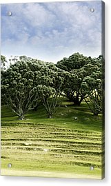 Trees Acrylic Print by Les Cunliffe