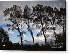 Trees Acrylic Print by Louise Heusinkveld