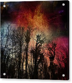 Trees No.7  Acrylic Print by Andy Walsh