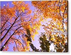 Trees Acrylic Print by Nur Roy
