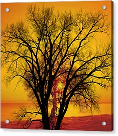Trees Of Gold Acrylic Print