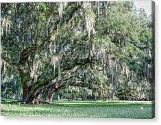 Trees Of Magnolia Acrylic Print
