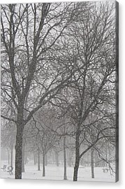 Trees Of Silence Acrylic Print