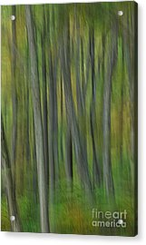 Trees Of The Forest Green - Blue Ridge Parkway Acrylic Print by Dan Carmichael
