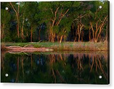 Trees Of The Lake Acrylic Print by Darren  White