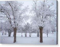 Trees Of Winter Acrylic Print by Darren  White