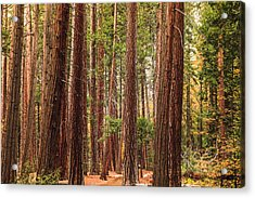 Trees Of Yosemite Acrylic Print
