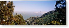 Trees On A Hill, Sausalito, San Acrylic Print