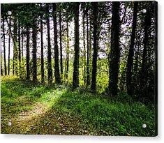 Trees On The Shannon Estuary Acrylic Print