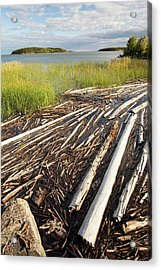Trees On The Shores Of Lake Athabasca Acrylic Print