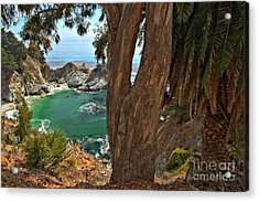 Trees Over Mcway Falls Acrylic Print